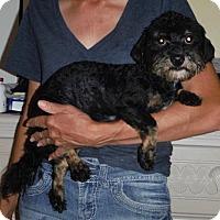 Adopt A Pet :: Corby - Orlando, FL