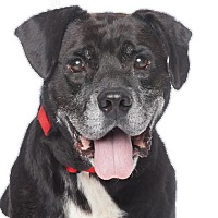 Adopt A Pet :: Abuelito - Los Angeles, CA