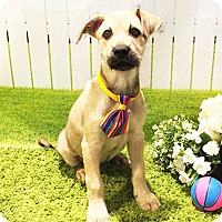Adopt A Pet :: Kael - Castro Valley, CA