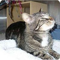 Adopt A Pet :: Tyler - Colmar, PA