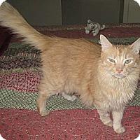 Adopt A Pet :: Otis - Naples, FL