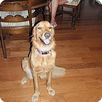 Adopt A Pet :: Chevie - Murdock, FL