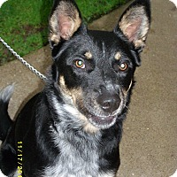 Adopt A Pet :: Zip-Prison Obedience Trained - Hazard, KY