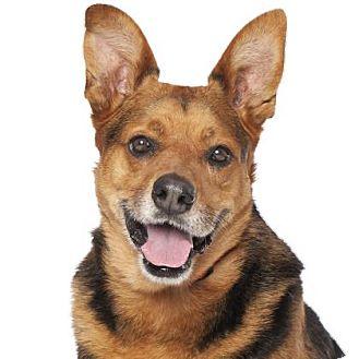 German Shepherd Dog Mix Dog for adoption in Los Angeles, California - Choco