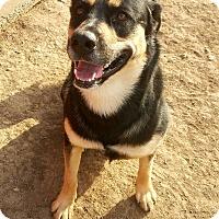 Adopt A Pet :: Roxie - Indianola, IA
