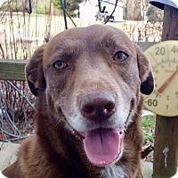 Adopt A Pet :: Cookie - Brattleboro, VT