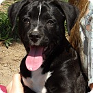 Adopt A Pet :: Chief (8 lb) Video!