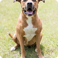 Adopt A Pet :: Claudia - Key Biscayne, FL