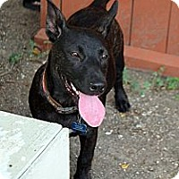 Adopt A Pet :: Magnolia (Maggie) - Houston, TX