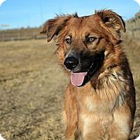 Adopt A Pet :: Claus - Cheyenne, WY