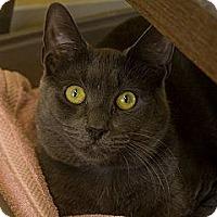 Adopt A Pet :: Benny - Lancaster, MA
