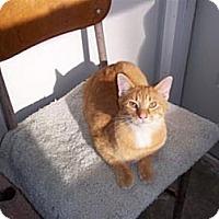 Adopt A Pet :: Benedict - Ashland, OH