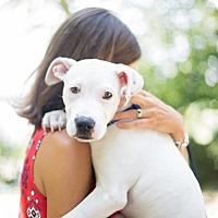 Adopt A Pet :: Moot - Reisterstown, MD