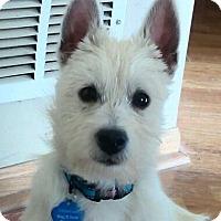 Adopt A Pet :: Louise-Pending Adoption - Omaha, NE