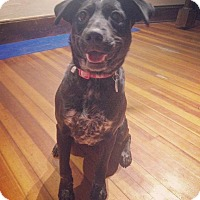Adopt A Pet :: Millie - Rexford, NY