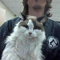 Adopt A Pet :: TWINKIE - Conroe, TX