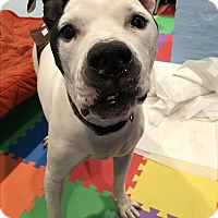 Adopt A Pet :: DALLAS! - Philadelphia, PA