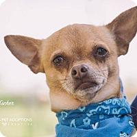 Adopt A Pet :: Escher - San Leon, TX