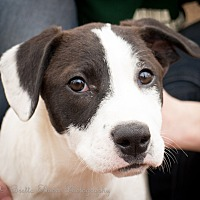 Adopt A Pet :: Woody - Daleville, AL