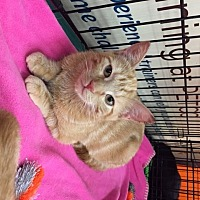 Adopt A Pet :: Figgy (LE) - Little Falls, NJ