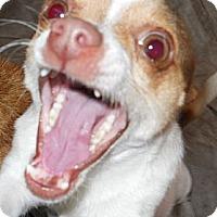 Adopt A Pet :: Rio - dewey, AZ