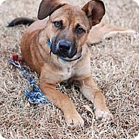 Adopt A Pet :: Emma - Hagerstown, MD