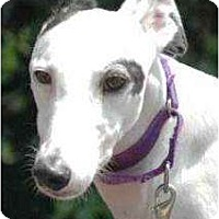 Adopt A Pet :: Ellie - Orange County, CA