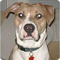 Adopt A Pet :: Holly - Rochester, NY