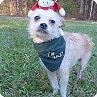Adopt A Pet :: Mojoe - Mocksville, NC