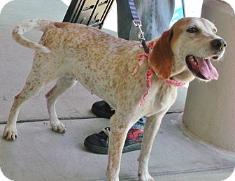 Redtick Coonhound Mix Dog for adoption in Somerset, Kentucky - Millie