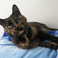 Adopt A Pet :: Marlene - High Point, NC