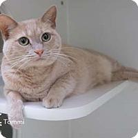 Adopt A Pet :: Tommi -may be adopted separate - Merrifield, VA