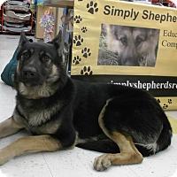 Adopt A Pet :: Trixie - Evergreen Park, IL