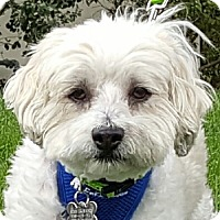 Adopt A Pet :: Carter - La Costa, CA