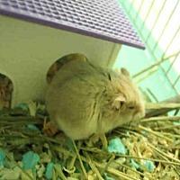 Adopt A Pet :: A1669067 - Los Angeles, CA