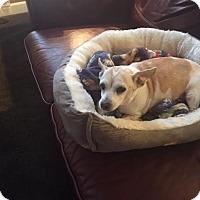Adopt A Pet :: Lola - Pataskala, OH