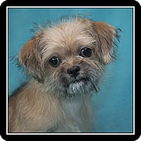 Adopt A Pet :: Brandi - San Diego, CA