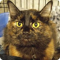 Adopt A Pet :: Marion - Midvale, UT