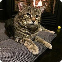 Adopt A Pet :: Thomas - Hamilton, ON