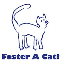 Adopt A Pet :: Foster A Cat - Harrison, NY
