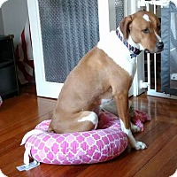 Adopt A Pet :: cOOper - Worcester, MA
