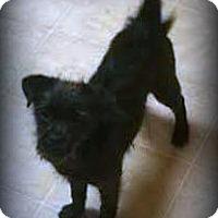 Adopt A Pet :: Luna - Tijeras, NM