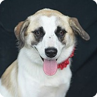 Adopt A Pet :: Mia - Plano, TX