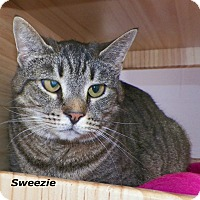 Adopt A Pet :: Sweezie - Dover, OH