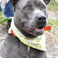 Adopt A Pet :: Georgia - Richmond, VA