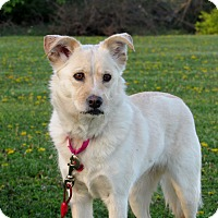 Adopt A Pet :: Hershey - Grinnell, IA