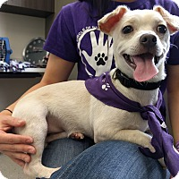 Adopt A Pet :: Charlie Brown - Houston, TX
