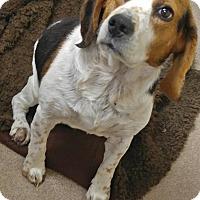 Adopt A Pet :: 1-1 - Triadelphia, WV