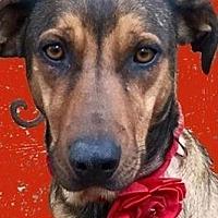 Adopt A Pet :: Spirit~SoSmart! - Memphis, TN