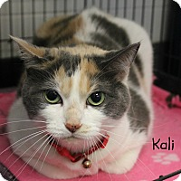 Calico Cat for adoption in Melbourne, Kentucky - Kali